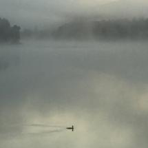 Loon-on-lake